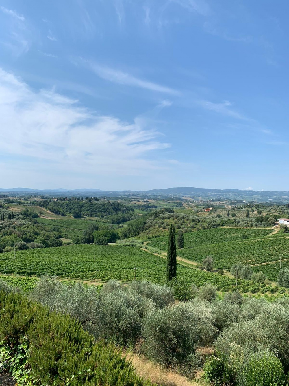 vineyard view in a romatic villa in tuscany